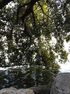 世界遺産 西湖の庭園2の写真・画像素材[950532]