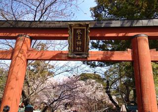 奈良 春の氷室神社の写真・画像素材[950799]