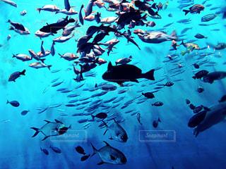 魚の群れの写真・画像素材[951276]