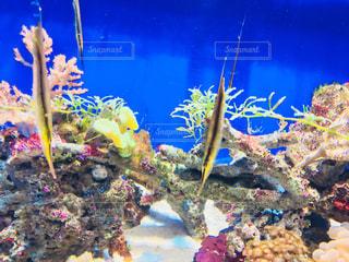 サンゴの水中ビューの写真・画像素材[959144]