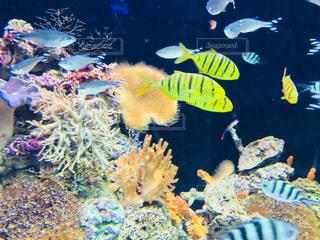 水の中の魚の写真・画像素材[959145]