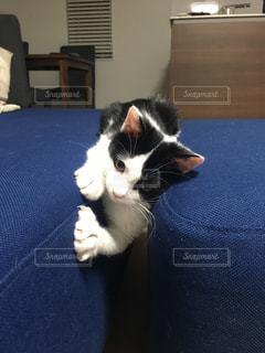 猫、スパイダーマンごっこをするの写真・画像素材[950715]