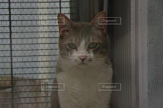 ベランダのネコの写真・画像素材[951245]
