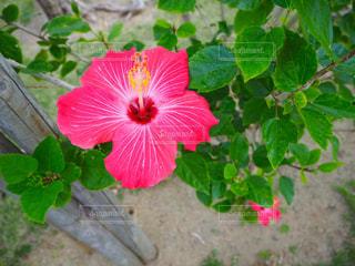 flower - No.951875