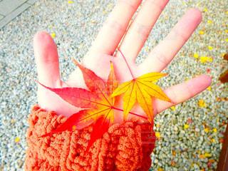 Autumn leavesの写真・画像素材[951876]