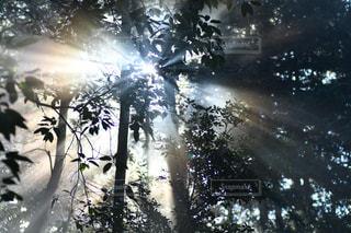 木漏れ日の写真・画像素材[963619]