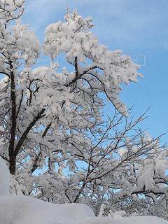 雪上がりの写真・画像素材[953469]