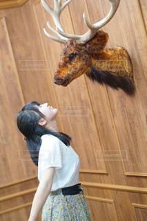 鹿さんとチューの写真・画像素材[952114]