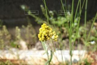 花の写真・画像素材[35962]