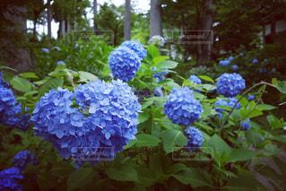 花の写真・画像素材[587021]