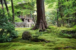 京都の写真・画像素材[587022]