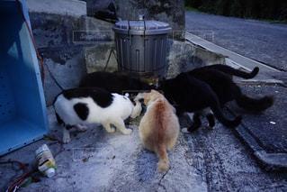 地面に座っている猫の写真・画像素材[803706]