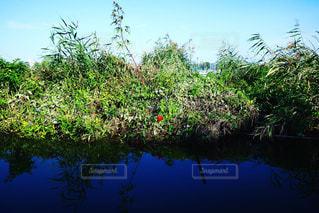 水面の花の写真・画像素材[803709]