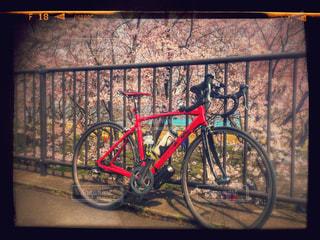 サクラと赤いロードバイクの写真・画像素材[952064]