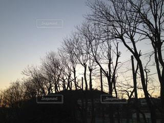 冬の夕暮れ並木 - No.953000