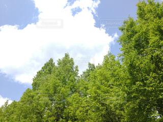 森の大きな木 - No.953003