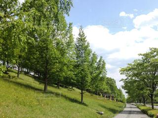 仙台の緑 - No.953006