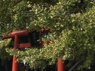 庭の赤い花 - No.993444
