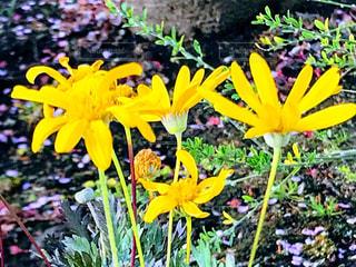 庭の黄色の花 - No.1000577