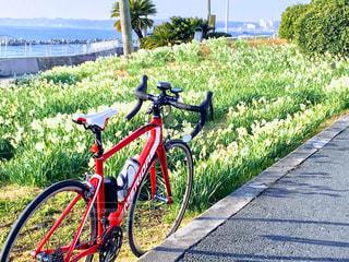 水仙とロードバイクの写真・画像素材[1005324]