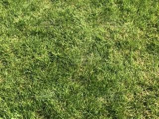 ニューベリー競馬場の芝の写真・画像素材[1151455]
