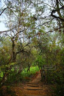 フォレスト内のツリーの写真・画像素材[955464]