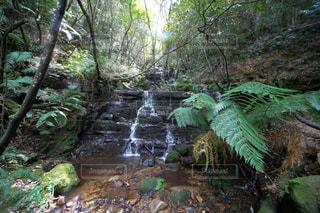 森の中の大きな滝の写真・画像素材[955465]