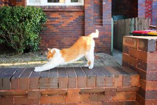 寝起きの野良猫の写真・画像素材[955467]