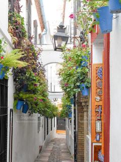 家と家の間に植物で作ったデザインがおしゃれの写真・画像素材[955495]