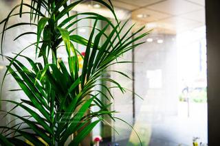 植物の写真・画像素材[955567]
