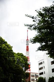 東京タワーの写真・画像素材[955570]
