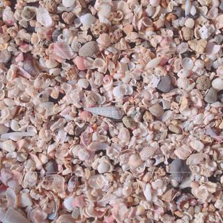 かわいい貝殻の写真・画像素材[972898]