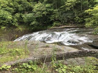 森を流れる川 - No.952244