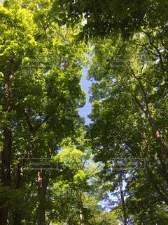 青の木漏れ日の写真・画像素材[952288]