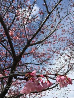 桜 - No.1067910