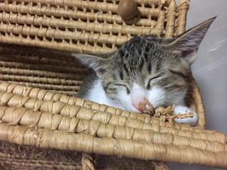 すやすやおやすみ中の写真・画像素材[952790]