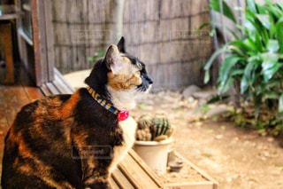 縁側に座る猫の写真・画像素材[958195]