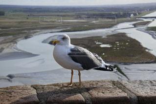 水の体の横に立っている大きな白い鳥の写真・画像素材[953634]
