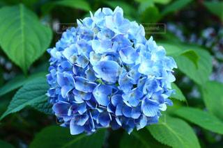 近くの花のアップ - No.953240