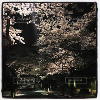 夜桜の写真・画像素材[953196]