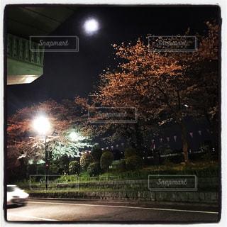 夜桜と道路の写真・画像素材[953197]