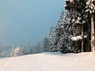 雪に覆われた斜面の写真・画像素材[953397]