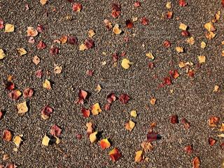 オレンジ色の花のグループの写真・画像素材[953433]