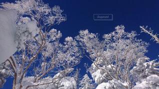 雪と青の写真・画像素材[961620]