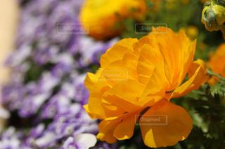 近くの花のアップの写真・画像素材[1103226]