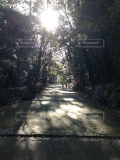 昼の並木道の写真・画像素材[954257]
