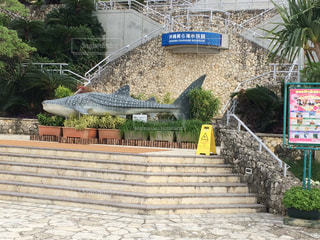 沖縄美ら海水族館の写真・画像素材[954180]