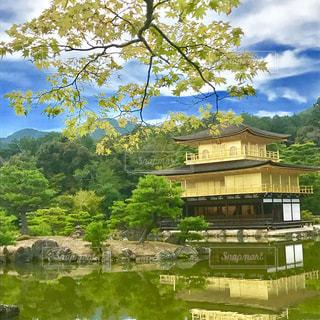 金閣寺の写真・画像素材[954233]