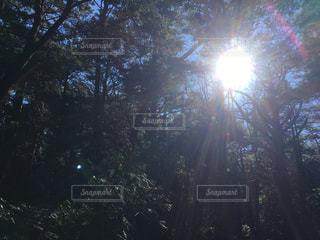 樹海の太陽の写真・画像素材[954297]