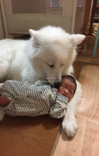 子守する犬の写真・画像素材[954310]